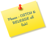 Please - CATCH & RELEASE all fish!